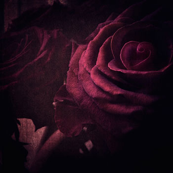 """""""But he that dares not grasp the thorn Should never crave the rose."""" thumbnail"""