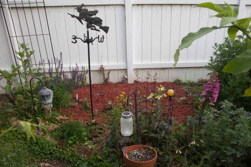 Photo of plants used for poisons or witch's potions are surprisingly common. A large Belladonna plant returned from last year on the left. To the right, Foxglove, a perennial favorite is also quite poisonous. Scattered throughout you'll find Castor Bean plants, used for Ricin, as well as the deadly Datura and Nicotiana.