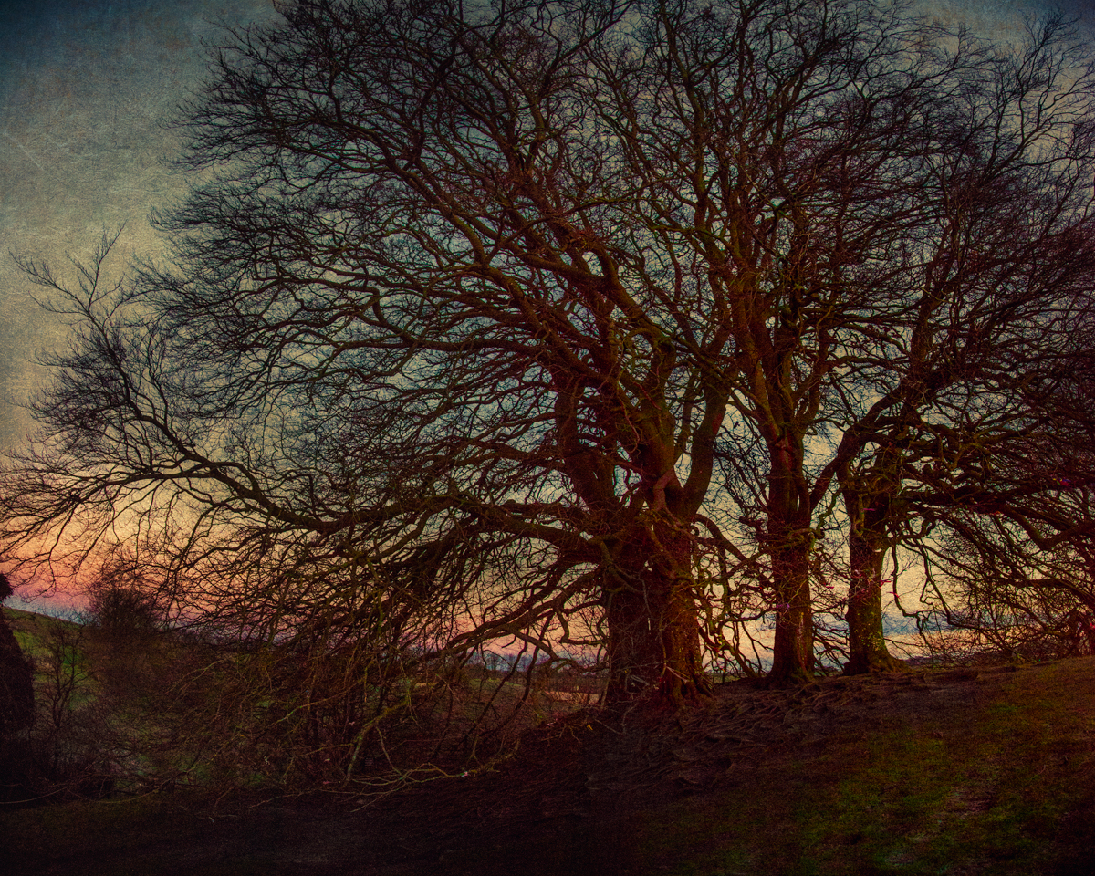 Trees on the Embankment at Sunrise
