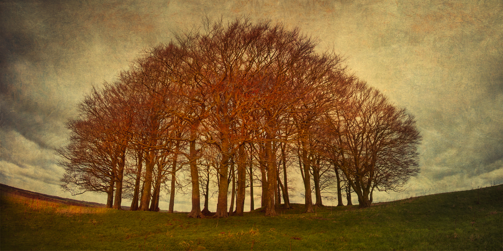 Locust trees atop a barrow on Overton Hill