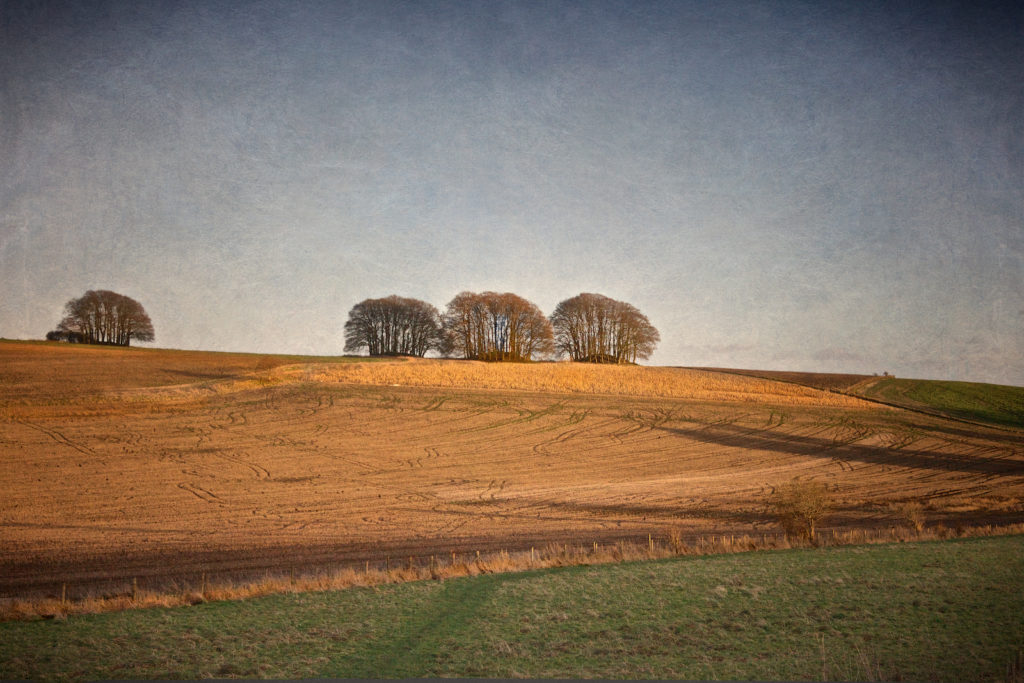 Barrows on Overton Hill, Avebury Circle, Wiltshire, Great Britain