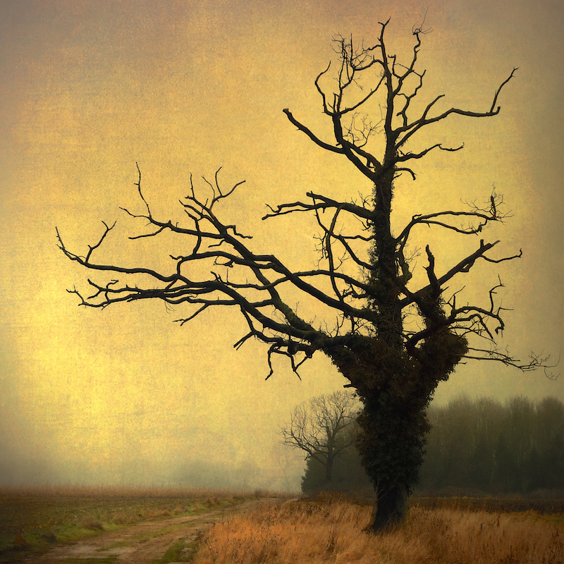 How the witch's tree seeped into my consciousness