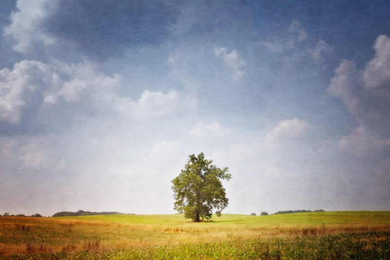 The Secret Life of Photographers and Trees