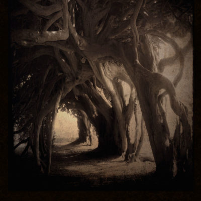 Yew Tunnel – Blank hard cover journal for your Book of Shadows, for all your witch's secrets