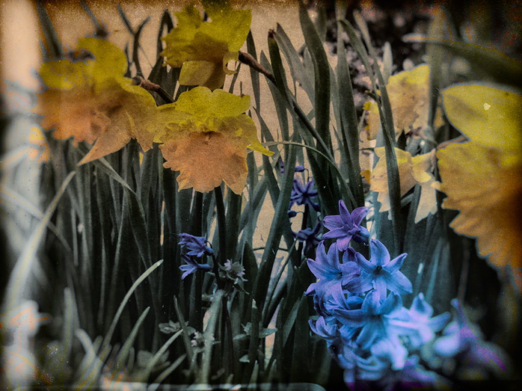 Dearest H: The witch's gardener mucks into spring