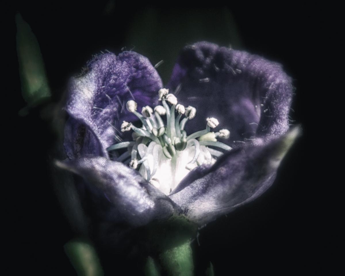 Witch's garden grimoire: Gardening journal with photos