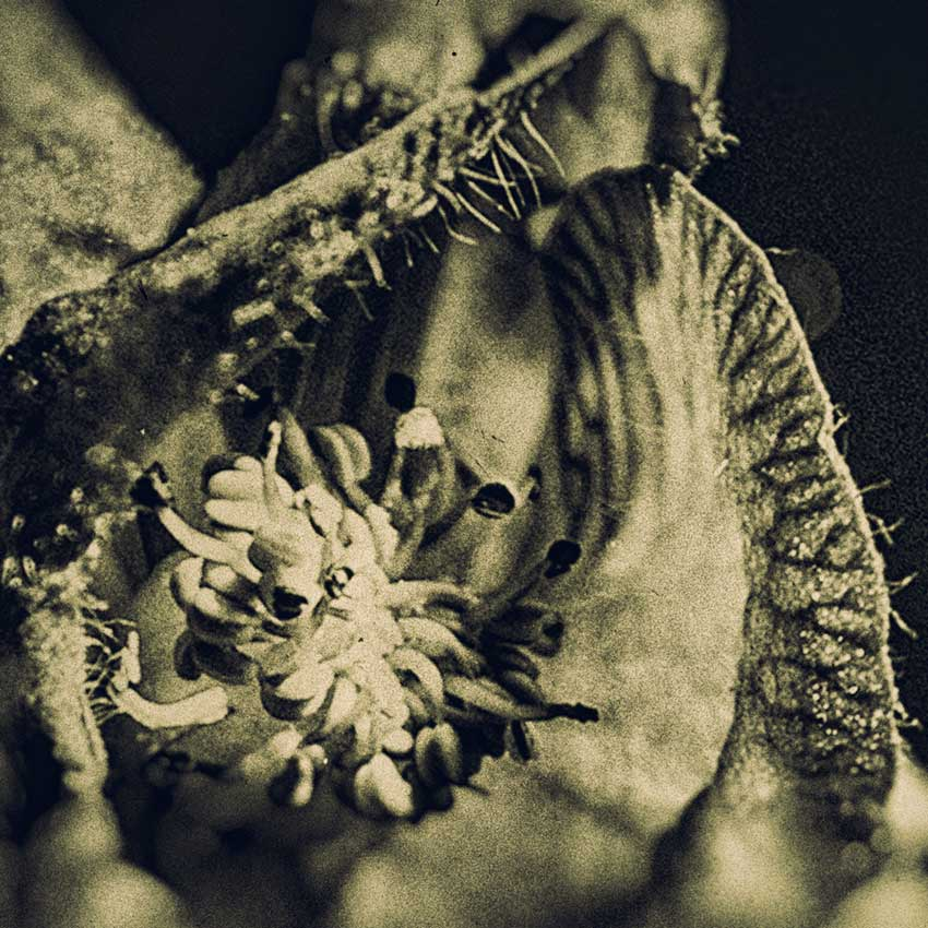 A closeup of a Monkshood blossom.