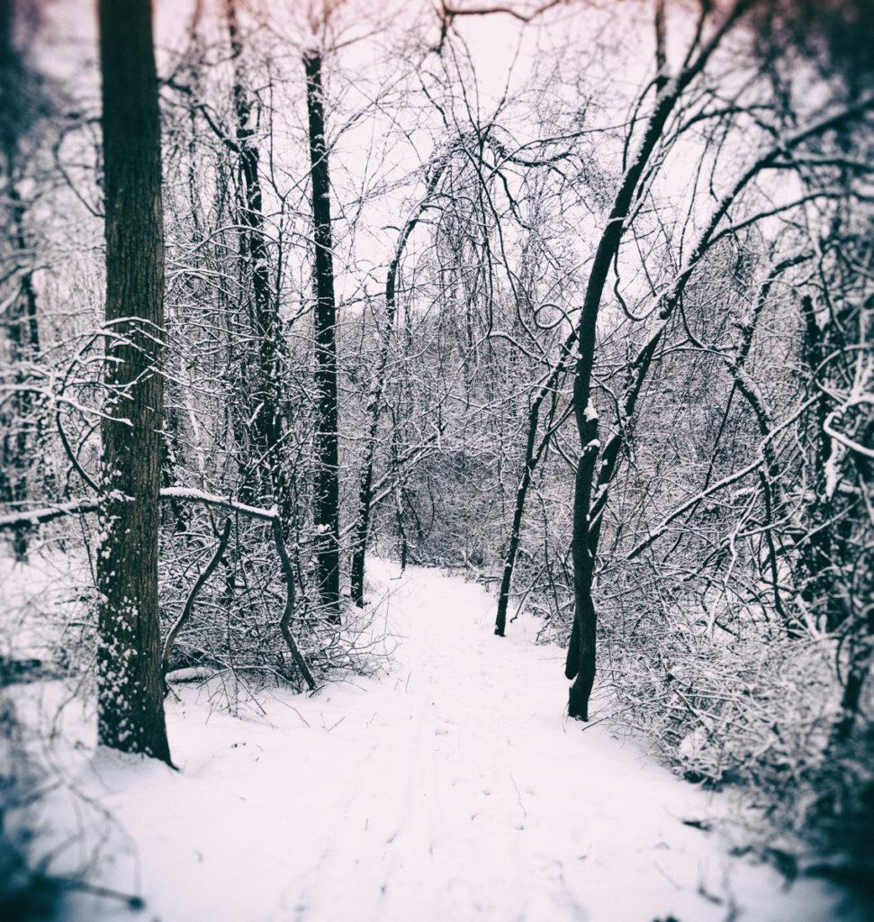 Trail through West Hills